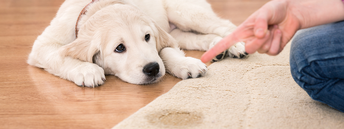DFW Steam Cleaning - Pet Stains and Odor Cleaning Specialists
